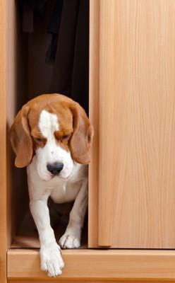 ドアの間にいる元気のない犬