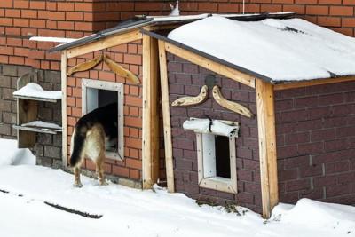 屋外に置かれた犬小屋に入っていく犬のお尻