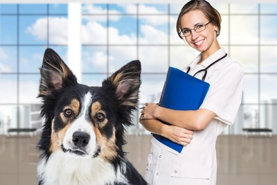 ボーダーコリーと獣医