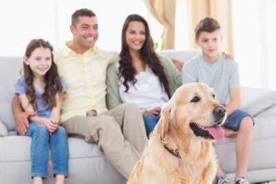 家族でテレビを楽しんでいる犬