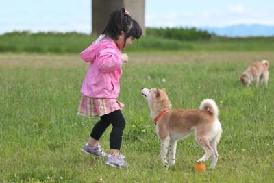 ピンクの服の女の子に近寄る柴犬