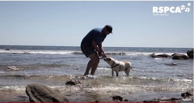 水際で遊ぶ男性と犬