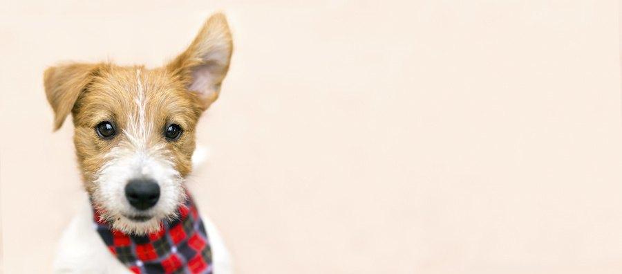 片方の耳を立てた犬