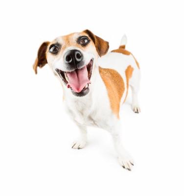 満面の笑顔の犬