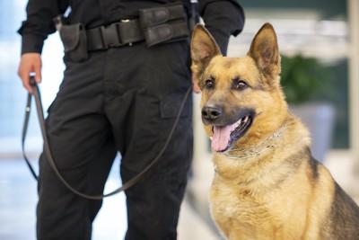 訓練士の隣に立つ警察犬