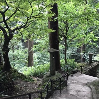 階段と木々
