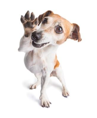 手を上げる犬