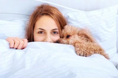 一緒に眠る女性とトイプードル