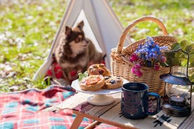 飼い主と一緒にピクニックをするチワワ