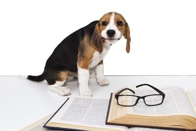 本のそばで座っている犬
