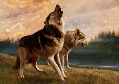 吠えるオオカミ