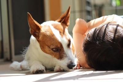 子供と寝ている犬の写真