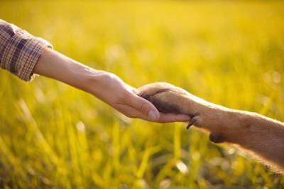 握手する犬と人の手