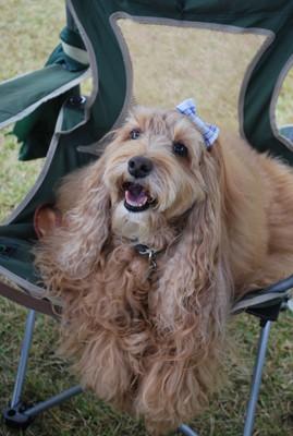 椅子に座ってにこにこ笑顔の犬