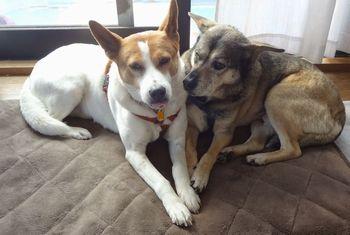 2匹一緒にクッションの上にいる犬達