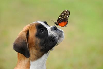 草原で蝶と遊ぶ犬
