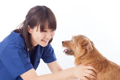 女性と向かい合う犬