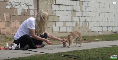 犬に触る女性