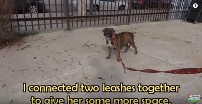 長いひもにつながれた犬