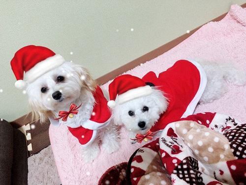 クリスマス風の犬