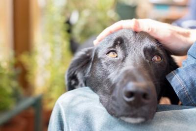 飼い主に甘える犬