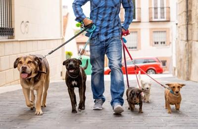 リードを付けて散歩する犬たち