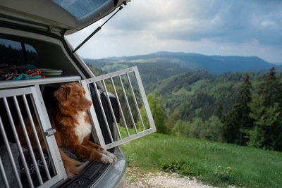 車に積まれたケージの中で休む犬