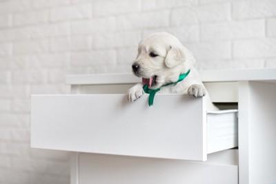棚の中に入る犬
