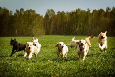 草原を楽しそうに走る犬たち