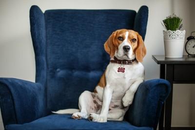 ボスっぽい犬