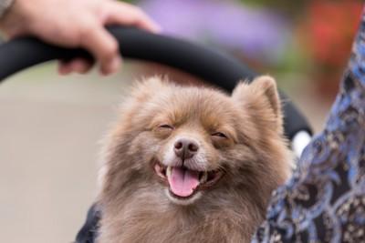 ストレススマイルのような表情の犬