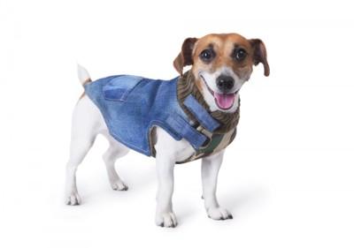 服を着て笑顔の犬