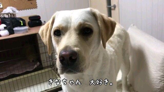 きなちゃん~字幕