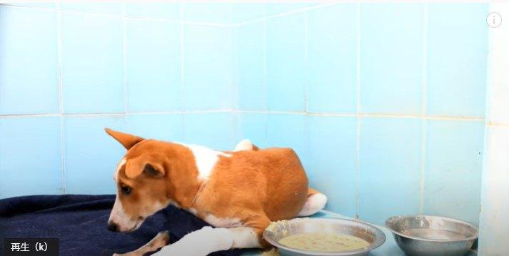 流動食を食べない犬