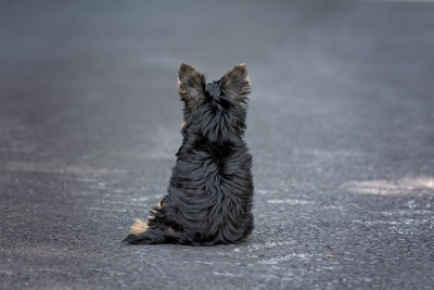 道路に座る黒い犬の後ろ姿