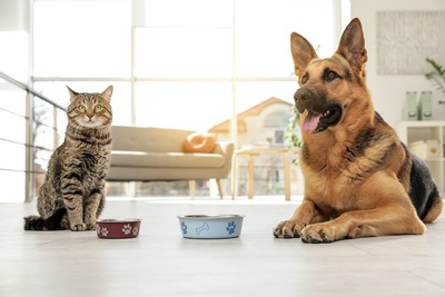 食器の前で待っている犬と猫