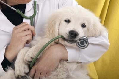 子犬と医者