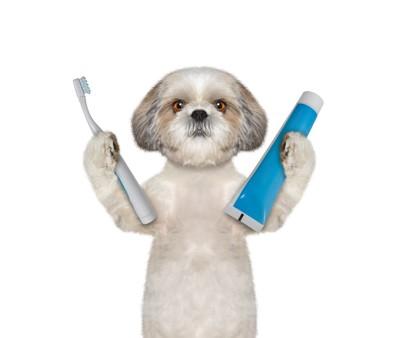 歯ブラシと歯磨き粉をもつ犬