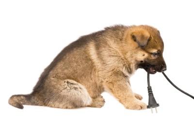電気コードをくわえる子犬