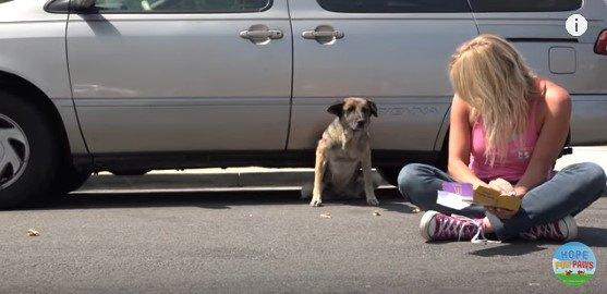 車の下から出て来る犬