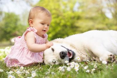 寝ころんでいる犬と耳を触る人間の赤ちゃん