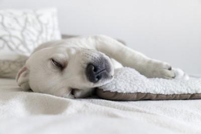 白目を剥いて寝る犬