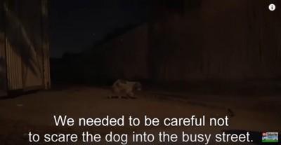 暗がりを歩く犬