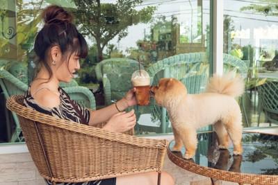 テーブルの上に乗る犬