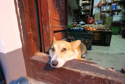 顎をのせ寂しそうに外を眺めている犬