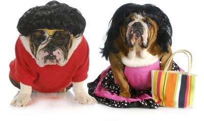 過剰なファッションをする犬