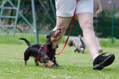 飼い主と一緒にジョキングする愛犬