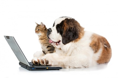 ネットを眺める犬と猫