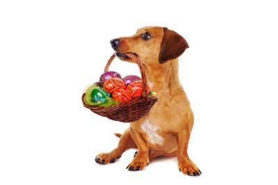 カラフルボールを持つ犬