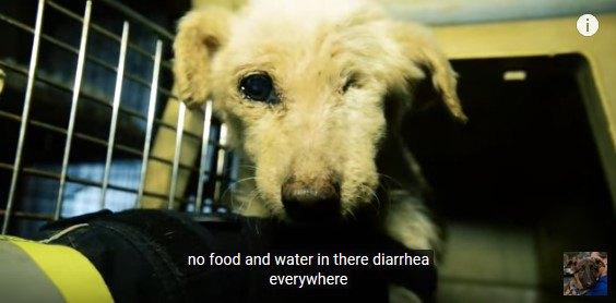 片目の犬をキャリーケースに入れる